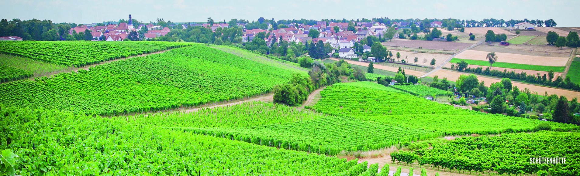 Weingut Seck Banner Loma.eco