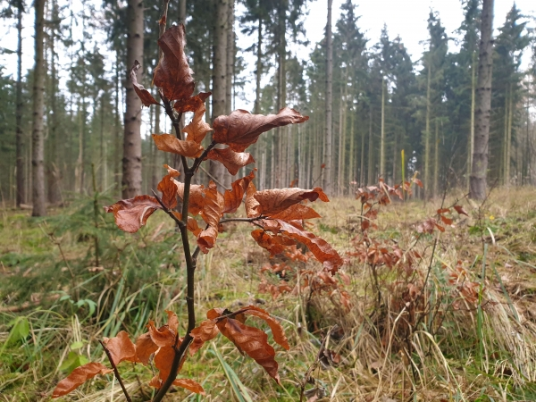 "Buche ""Die Loma-Baumpflanzaktion"" | Loma.eco | Hofladen 24/7 | Loma.eco"